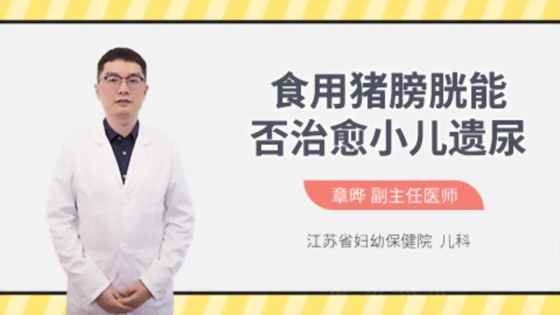 食用猪膀胱能否治愈小儿遗尿